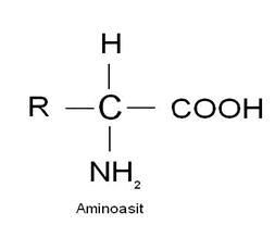 aminoasit
