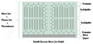 danielli-dawson